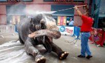 Bath Time for Suzy the Elephant