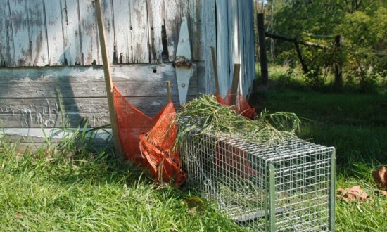 Getting Rid of Animal Pests Humanely