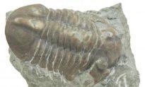 Night of the Trilobites Part I