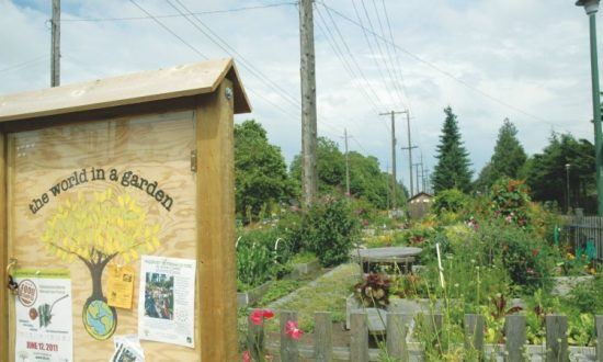 Vancouver Community Gardens a Growing Trend