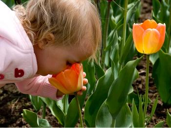 SMELL THE TULIPS: There is no other plant that makes us feel like spring is here like tulips.   (Samira Bouaou/The Epoch Times)