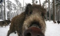 Swedes Still Love the Outdoors Despite Increase in Dangerous Animals