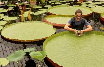 Smallest Waterlily Saved from Extinction
