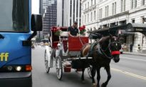 State Senator Calls for Horse-Drawn Carriage Ban