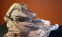 New Dinosaur Discovered in Utah