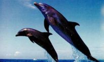 Save the Ocean, Save the Dolphins, Save Ourselves?