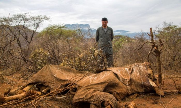 Yao Ming, WildAid conservation organization ambassador and former NBA star, looks at the carcass of an elephant in Samburu, Kenya, in August 2012. (Simon Maina/AFP/GettyImages)