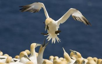 BP Oil Spill Puts Canada's Migratory Birds at Risk