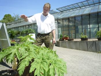 Giant Hogweed and Serious Health Issues