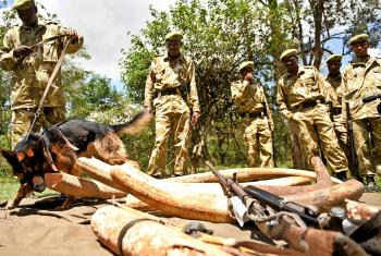 Cameroon Regulates Trade of Endangered Animal Meat