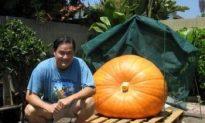 Pumpkinmania Update and Countdown