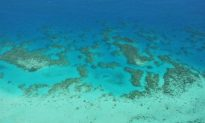 Reef Heritage Listing Under Threat