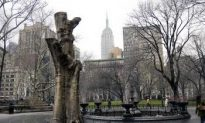 Madison Square Park Relived