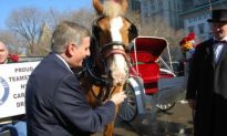 Councilman Rallies Behind Horse-Drawn Carriages