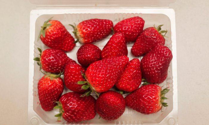 A new variety of strawberry is exhibited at the 7th International Strawberry Symposium on Feb. 18, 2012 in Beijing, China. (Lintao Zhang/Getty Images)