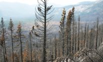 Wildfires Push Plants to Move North