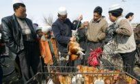China Reports Bird Flu Outbreak in Inner Mongolia