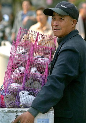 An old man selling rabbits (AFP/Getty Images)