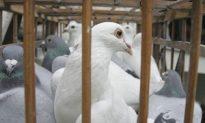 China Reports New Bird Flu Outbreak in Northeast