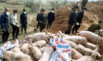 Pigs in China&#039s Hunan Province Test Positive for Bird Flu