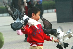 November 4, 2005, a Shenyang boy in close contact with birds. (The Epoch Times)