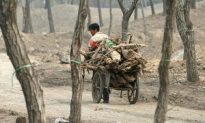 Few Virgin Forests Left in China