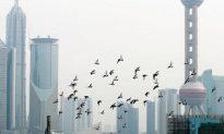 Guangzhou Man Died of Suspected Bird Flu
