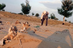 A worker sticks straw into the Gobi desert to prevent sand movement in Yinchuan, China. (Katharina Hesse/Getty Images)