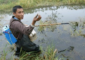 Local villager Yin Jiqiu, showing the small fish he caught from a stream branching off from Dongting Lake, on October 31, 2004. (Frederic J. Brown/AFP/Getty Images)