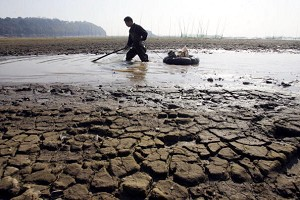 A fisherman net fishing at the quickly drying up Dongting Lake on January 11, 2007. (China Photos/Getty Images)