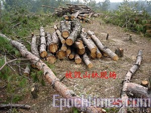 Destroyed woods in the mountain. (The Epoch Times)