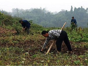 Chinese farmers, having endured decades of illegal land seizures, have begun to claim back their stolen farmland. (Guang Niu/Getty Images)