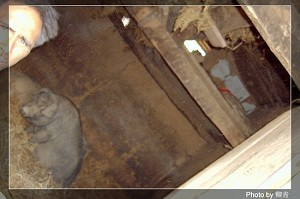 Pigs in the basement of a thatched cottage; people sleep above the pigpen. (Qing Qing/The Epoch Times)