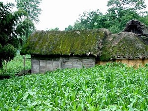 Most residents live in thatched huts made of grass. (Ben Ben)