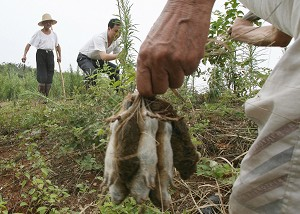 Chinese farmers hunt rats near the village of Bing Hu in Hunan Province, 13 July 2007. Two billion rats have fled their flooded homes, destroying farmland and posing a health risk to humans. (Mark Ralston/AFP/Getty Images)