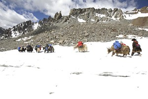 Tibetan nomads use yaks to carry the baggages of pilgrims who have come to worship the snow-capped Kangrinboqe Mountain, known as Mt. Kailash in the West, in Purang County of Tibet. (China Photos/Getty Images)