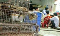 Barbecued Cats a Popular Delicacy in Changchun
