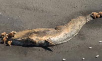 Dozens of Whales Are Mysteriously Dying Off the Coast of Alaska (Video)