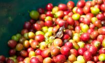 The Dark Side of Coffee: An Unequal Social and Environmental Exchange