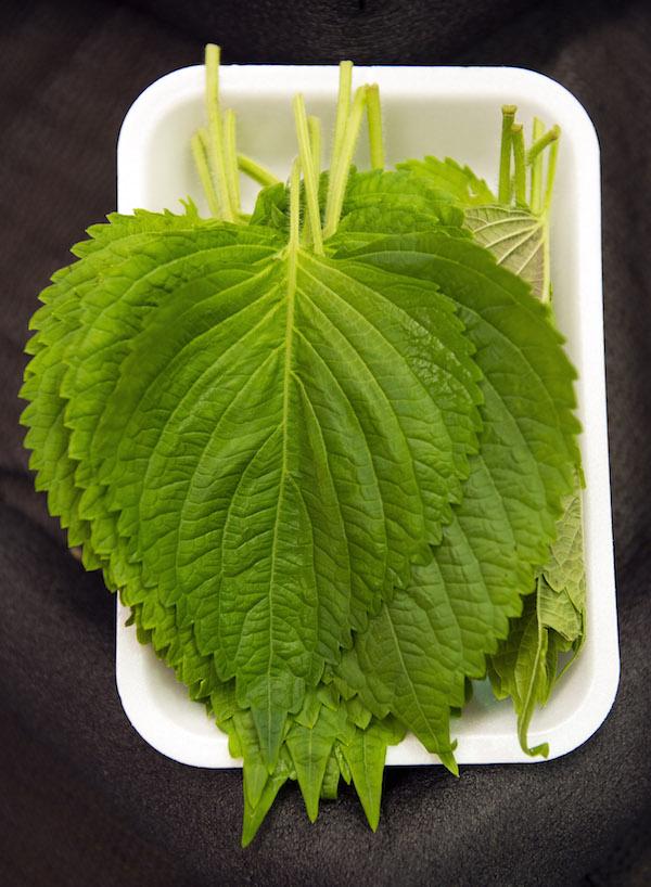 Perilla leaf. (Matthew Mead/AP)
