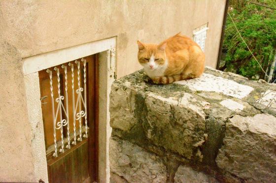 Plump cats greeted me along the way. (Li Yen/Epoch Times))