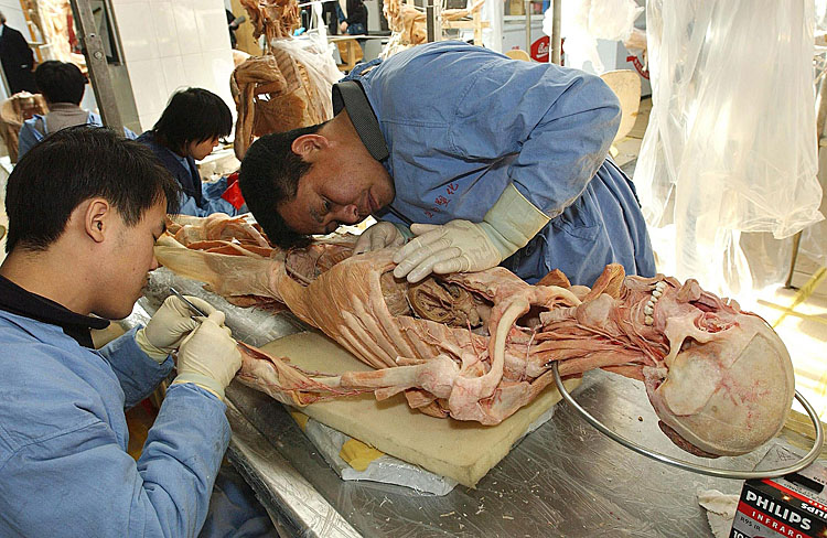 A human body at the Von Hagens Plastination factory in Dalian