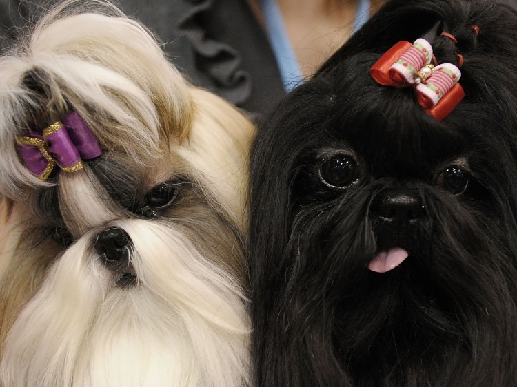 Dog and Cat Show