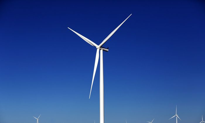 Wind turbines are viewed at a wind farm on March 27, 2015 in Taft, Texas. (Spencer Platt/Getty Images)