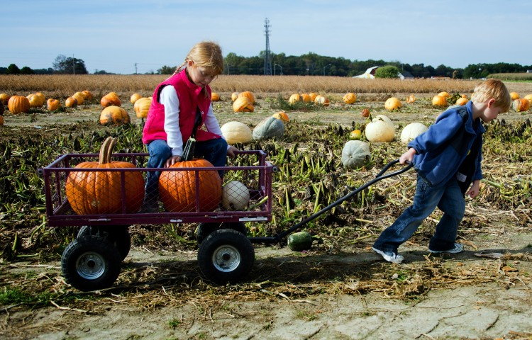 Five-year-old Aidan (R) pulls his seven-year-old sister Autumn and their pumpkins in a wagon through the patch at Councell Farms in Easton, MD, Oct. 17, ahead of the Halloween holiday. (JIM WATSON/AFP/Getty Images)