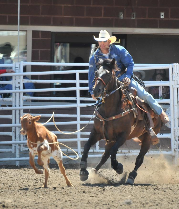 A rider ropes a calf during the rodeo at the Calgary Stampede. (Jerry Wu/The Epoch Times)