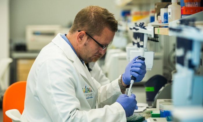 Reserach technicians prepare DNA samples to be sequenced in the production lab of the New York Genome Center on September 19, 2013 in New York City. (Andrew Burton/Getty Images)