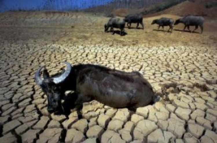 Water buffalo in a dried up pond in Shilin County, Yunnan Province, China. (Getty Images)