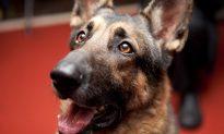Sick 'Werewolf' Dog Stood On Side Of Road, Then Gets Help