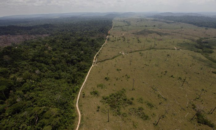 A deforested area near Novo Progresso in Brazil's northern state of Para in a file photo.  (AP Photo/Andre Penner, File)